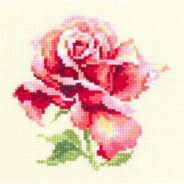 MN 150-001 Stickpackung - Wunderschöne Rose