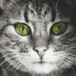 Zahlmuster online - Katze mit grünen Augen