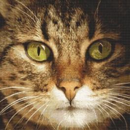 Zahlmuster online - Katze Lucky
