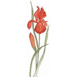 Die rote Schwertlilie - Zählmuster