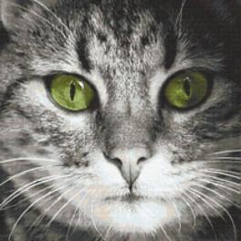 Set mit Aida mit Aufdruck und Stickgarn - Katze mit grünen Augen