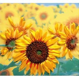 Zestaw wstążeczkowy - Słoneczniki