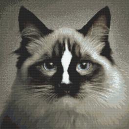 Zahlmuster online - Katze ragdoll