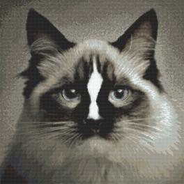 Zählmuster - Katze ragdoll