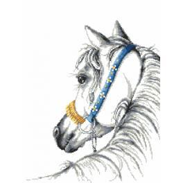 Set mit Aida mit Aufdruck und Stickgarn - Arabisches Pferd