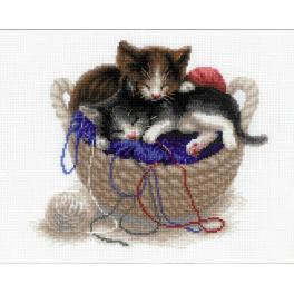 Set mit Wollgarn - Kätzchen im Korb
