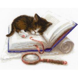 Set mit Wollgarn - Katze auf dem Buch