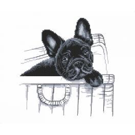 Aida mit Aufdruck - Französische Bulldogge - Ich bin hier