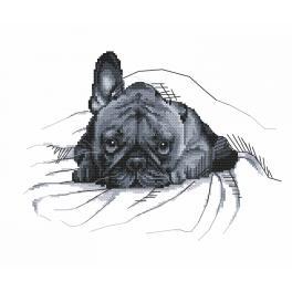 Zahlmuster online - Französische Bulldogge - Das war ich nicht