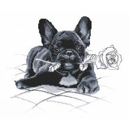 Aida mit Aufdruck - Französische Bulldogge - Entschuldigung