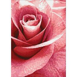 WD019 Diamond Painting Set - Rosa Rose