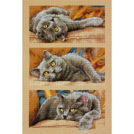 Stickpackung - Katze Max