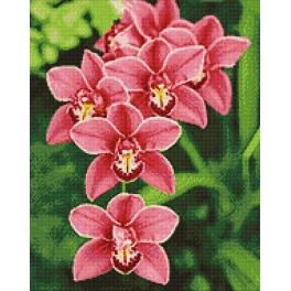 Diamond Painting Set - Orchidee