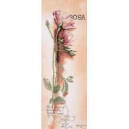 Stickpackung mit Stickgarn und Hintergrund - Botanische Rose