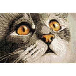 Diamond Painting Set - Katzenüberraschung