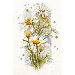 Stickpackung - Weiße Gänseblümchen