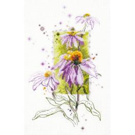 Stickpackung - Echinacea