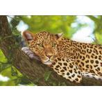 Stickpackung mit Stickgarn und Hintergrund - Jaguar