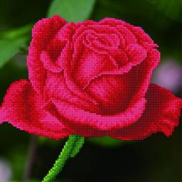 Diamond Painting Set - Blühende Rose