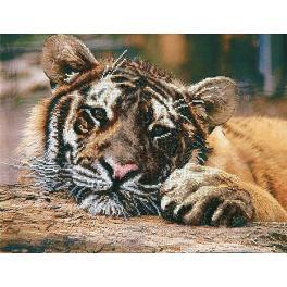 Stickpackungen mit Perlen - Tiger