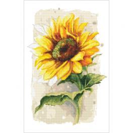 ZN 10436 Set mit Aida mit Aufdruck und Stickgarn - Stolze Sonnenblume