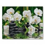 PC4050567 Malen nach Zahlen - Orchideen im stillen Wasser