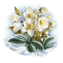 AN 10306 Aida mit Aufdruck - Winterblume