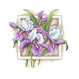GC 10314 Zählmuster - Würdevolle Iris