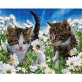 PD4050167 Diamond Painting Set - Kätzchen auf dem Kamillenfeld