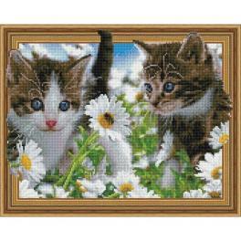 5PD4050038 Diamond Painting Set - Kätzchen auf dem Kamillenfeld
