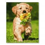 PC4050743 Malen nach Zahlen - Hund mit Blume